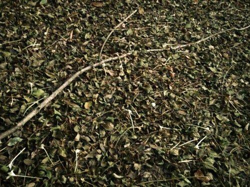 brown - leaves